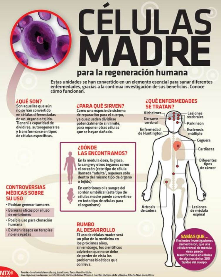 infografia-beneficios-de-la-celulas-madre