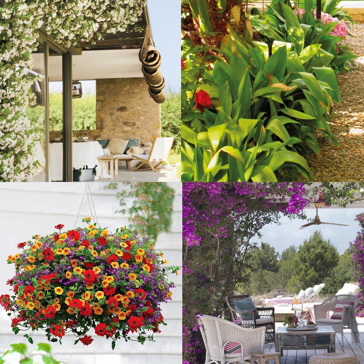 plantas de exterior para jardin