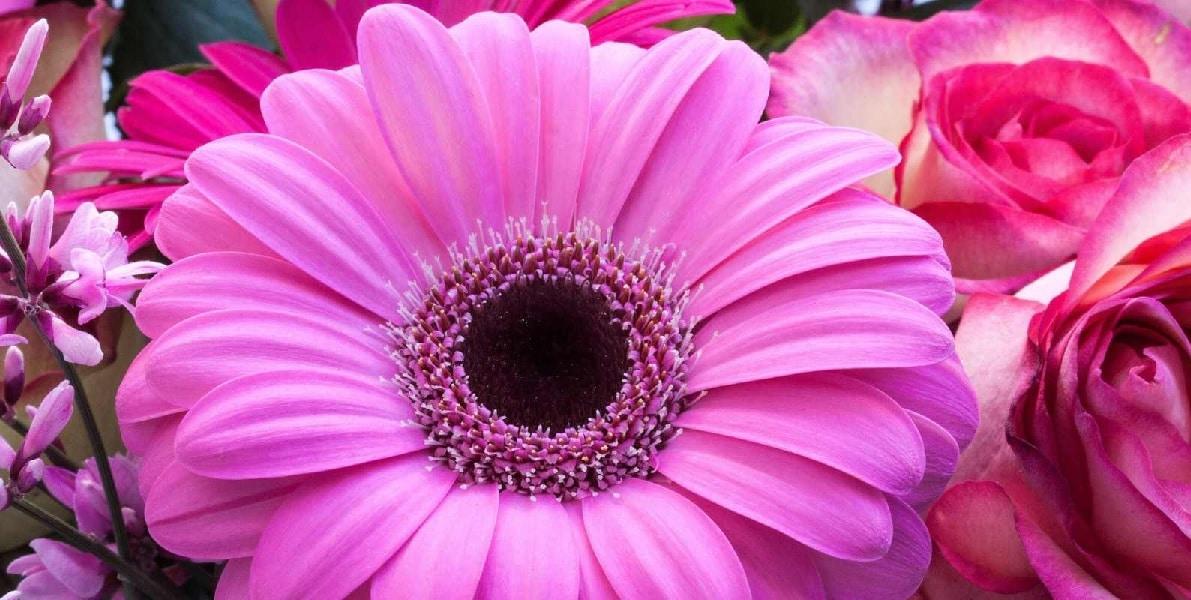 enviar flores a domicilio