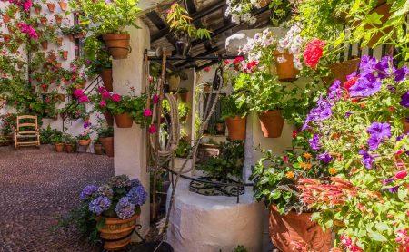 Las Mejores Plantas para Plantar en Primavera
