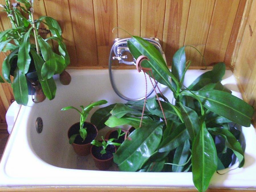 Métodos para regar las plantas en vacaciones