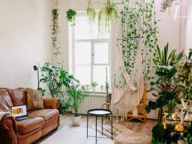 Garden room: Nueva tendencia de decoración con plantas