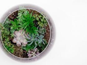 pasos para crear un terrario de cactus y suculentas