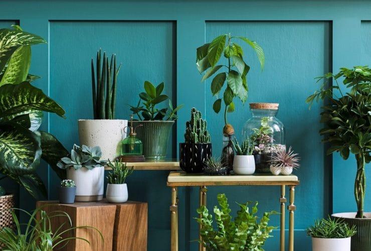 Plantas de interior que más sobreviven